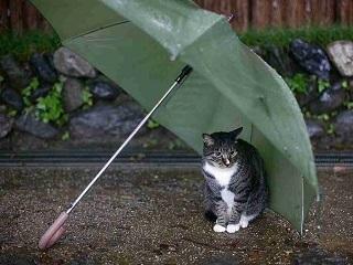 雨と傘と猫.jpg